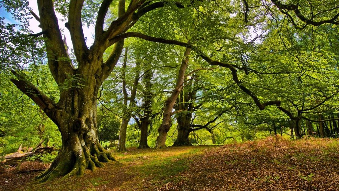 Lead Green- Environmental awareness- SDG15