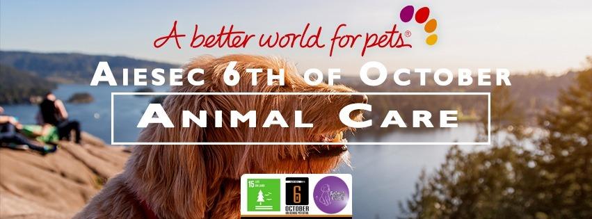 Animal Shelter - Rescue them