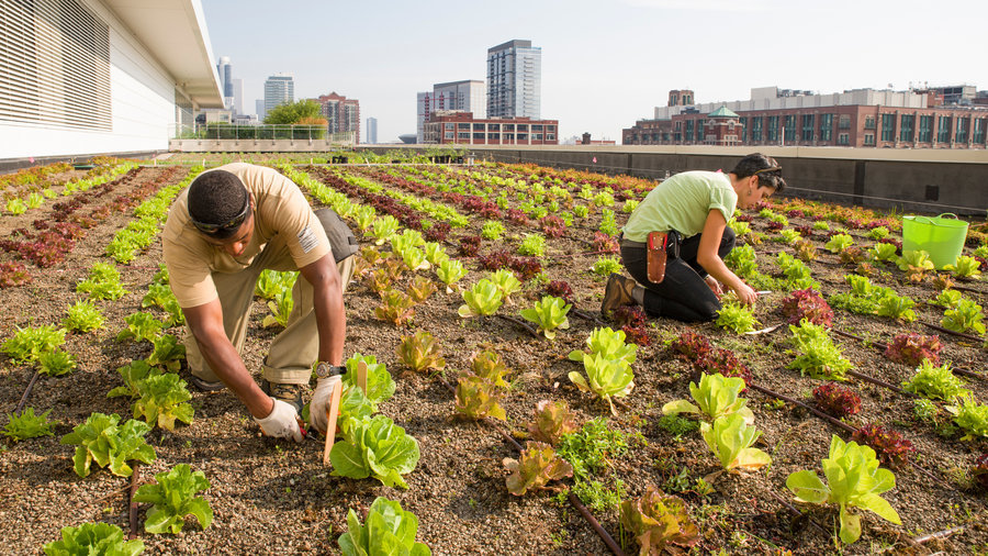 Planting Seedlings on Egyptian Farms-SustainableCities