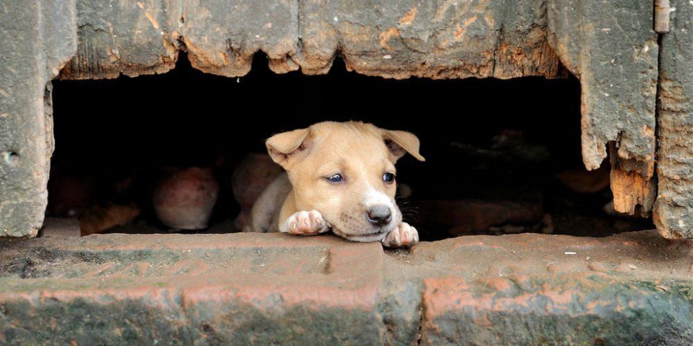 Helping Street Injured Animals-Sustainable Cities