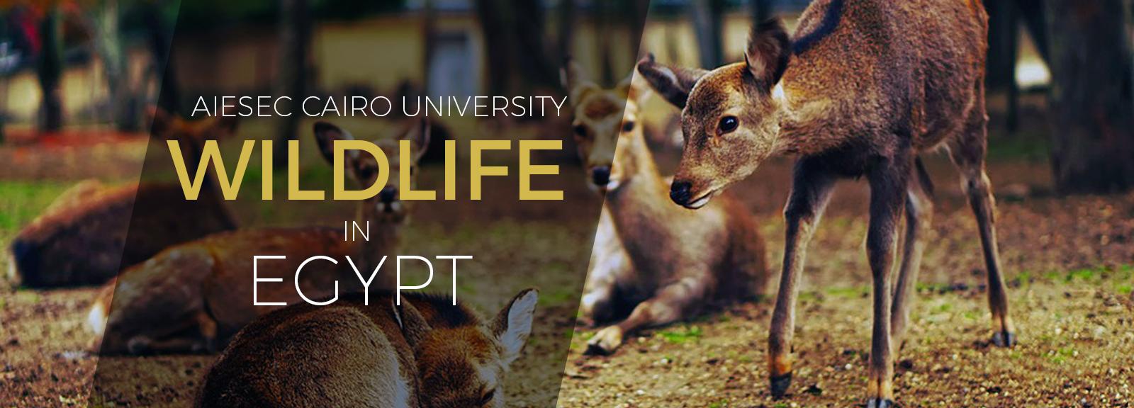 Photography at Wildlife Masry