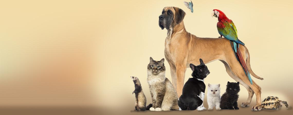 Because we love animals!