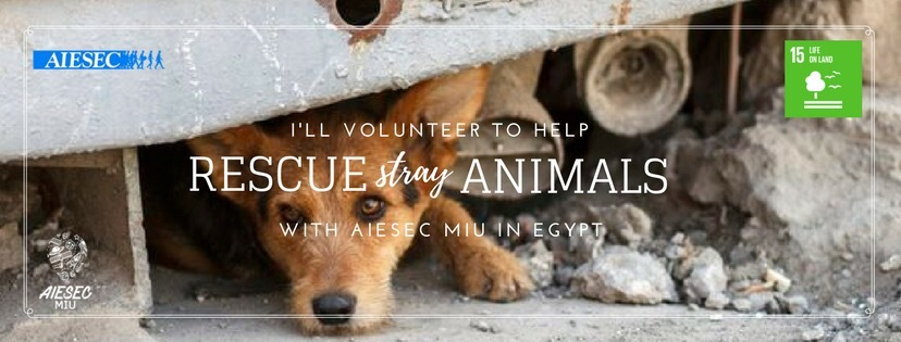 Rescue | Animal Shelter (June)