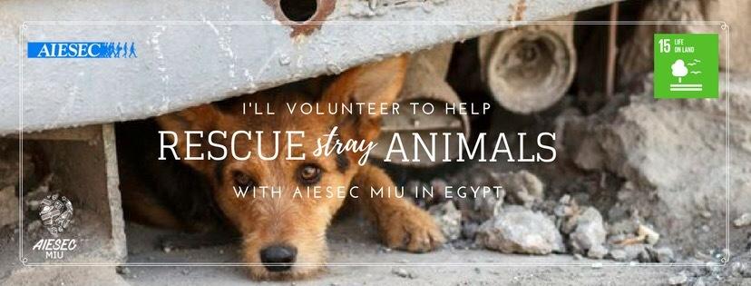 Rescue   Animal Shelter (June)