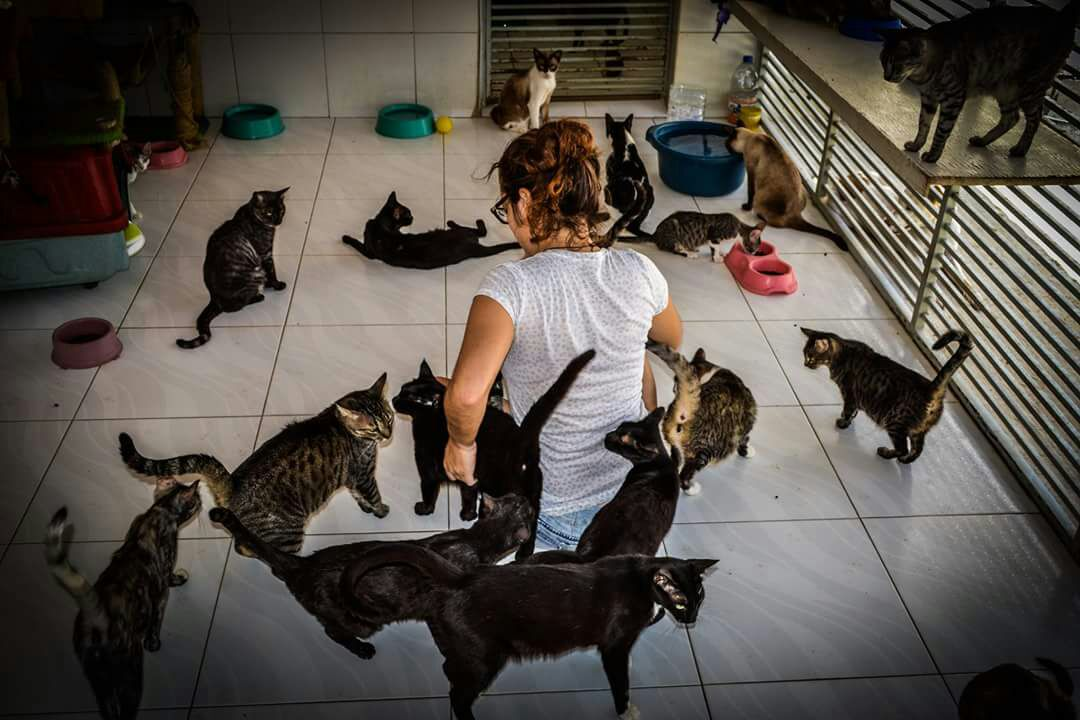 Help Dogs and Cats in Brazil