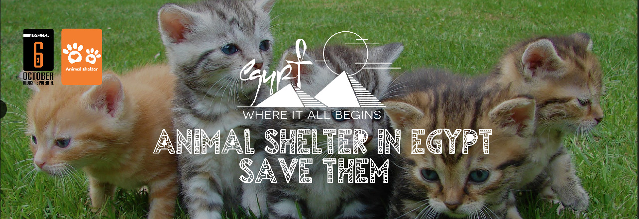 Animal shelter in Egypt - Save them