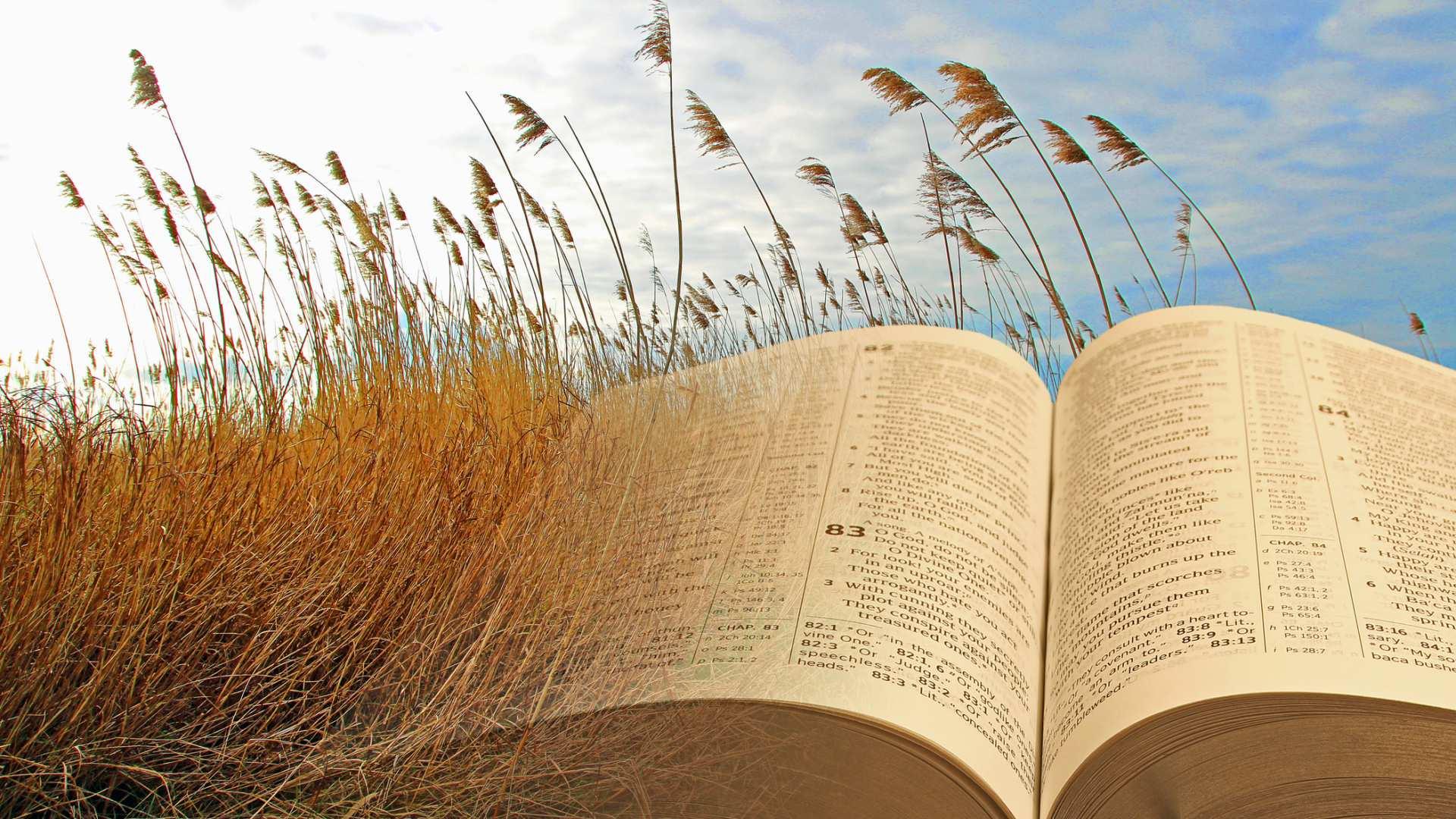 Le Parabole, racconti senza tempo per conoscere le verità divine (15) – Il giudizio delle nazioni