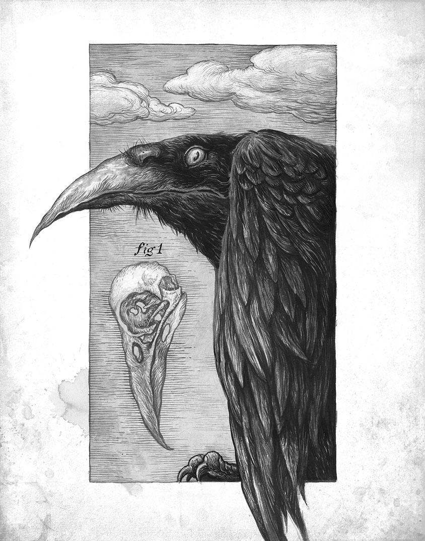 Ivica Stevanovic - evil crow