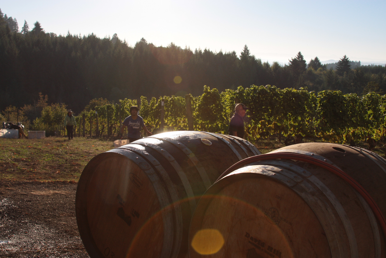 Wine Harvest Editorial
