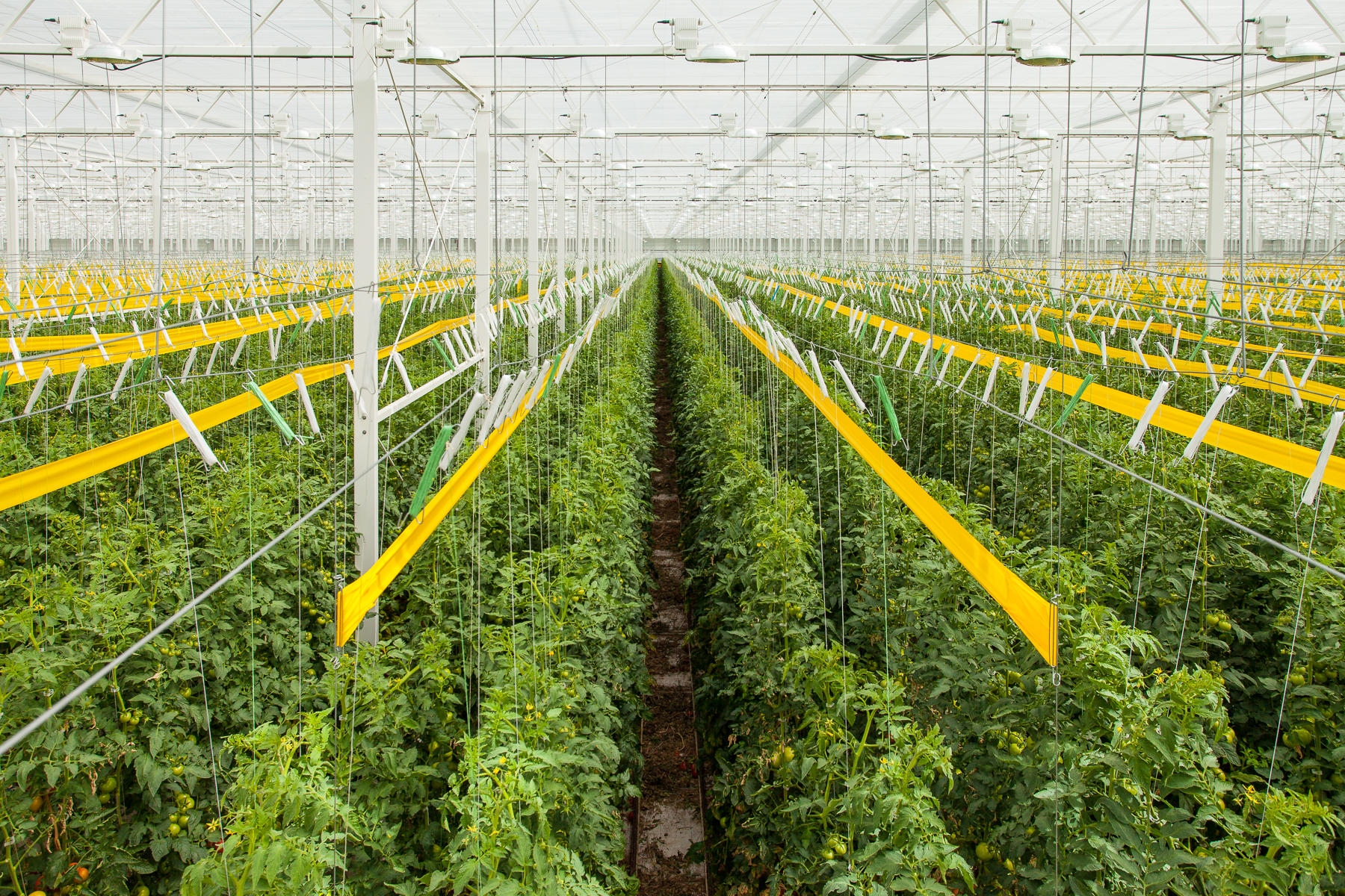 Marketing Images for Houwelings Tomatoes, a Hydroponic Greenhouse.