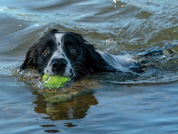 Canine watersports