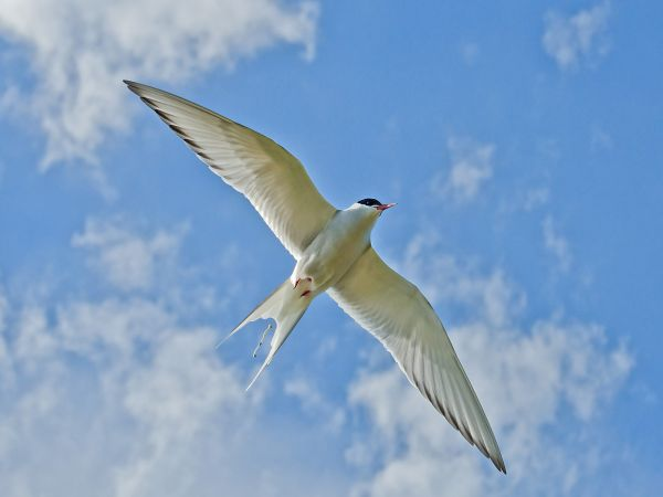 Tern passing, a motion in motion