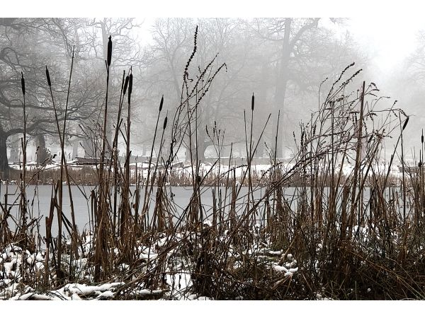 Reeds, trees and mist at Dunham