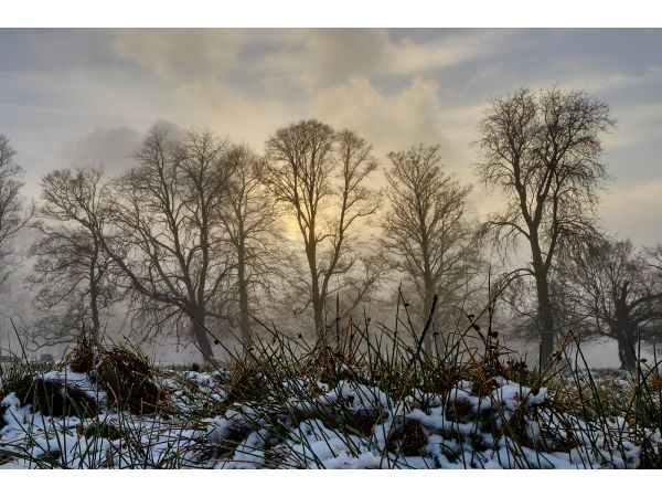 A late winter's afternoon at Dunham Massey