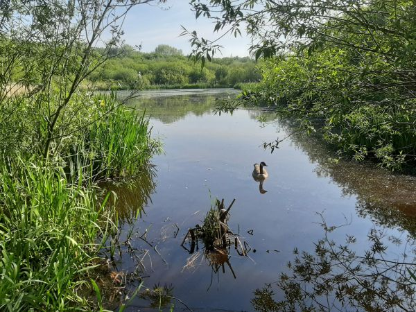 Broad Ees Nature Reserve