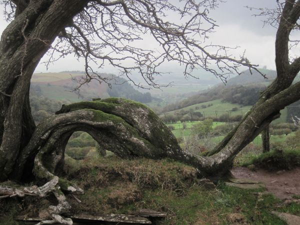 Framed by nature - Offa's Dike Path