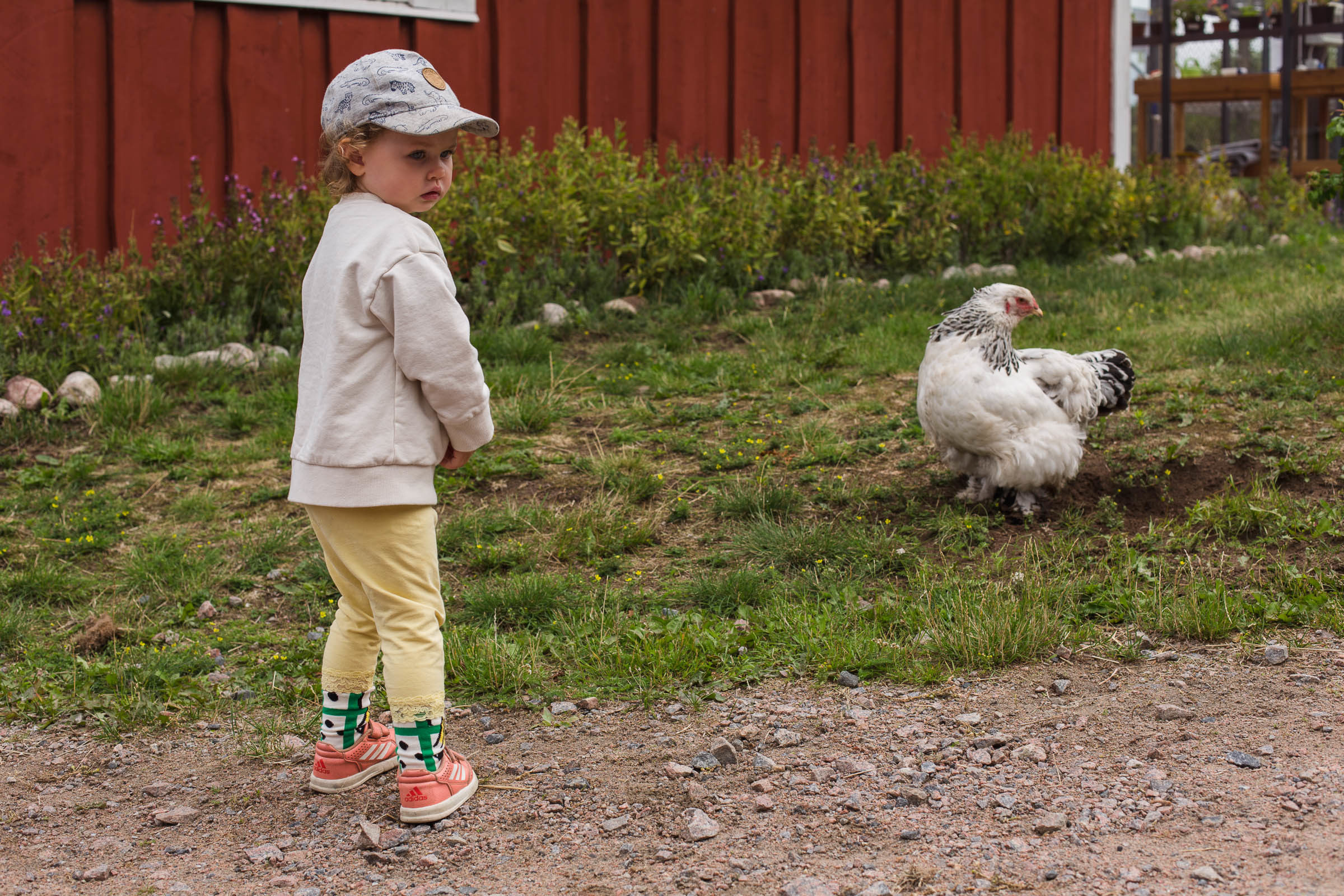Olofstorps djur & trädgård