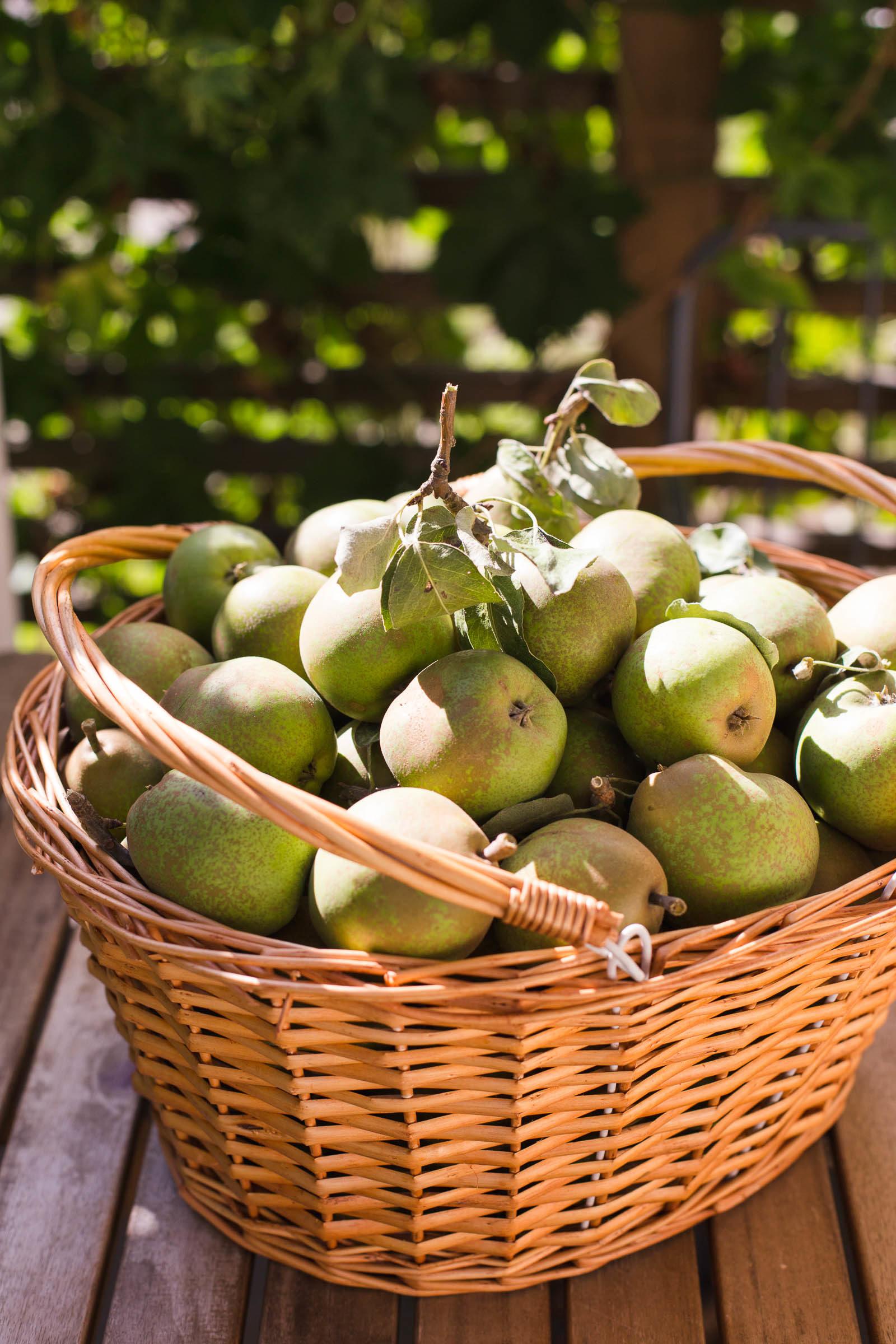 Koka eget päronmos - enkelt och gott