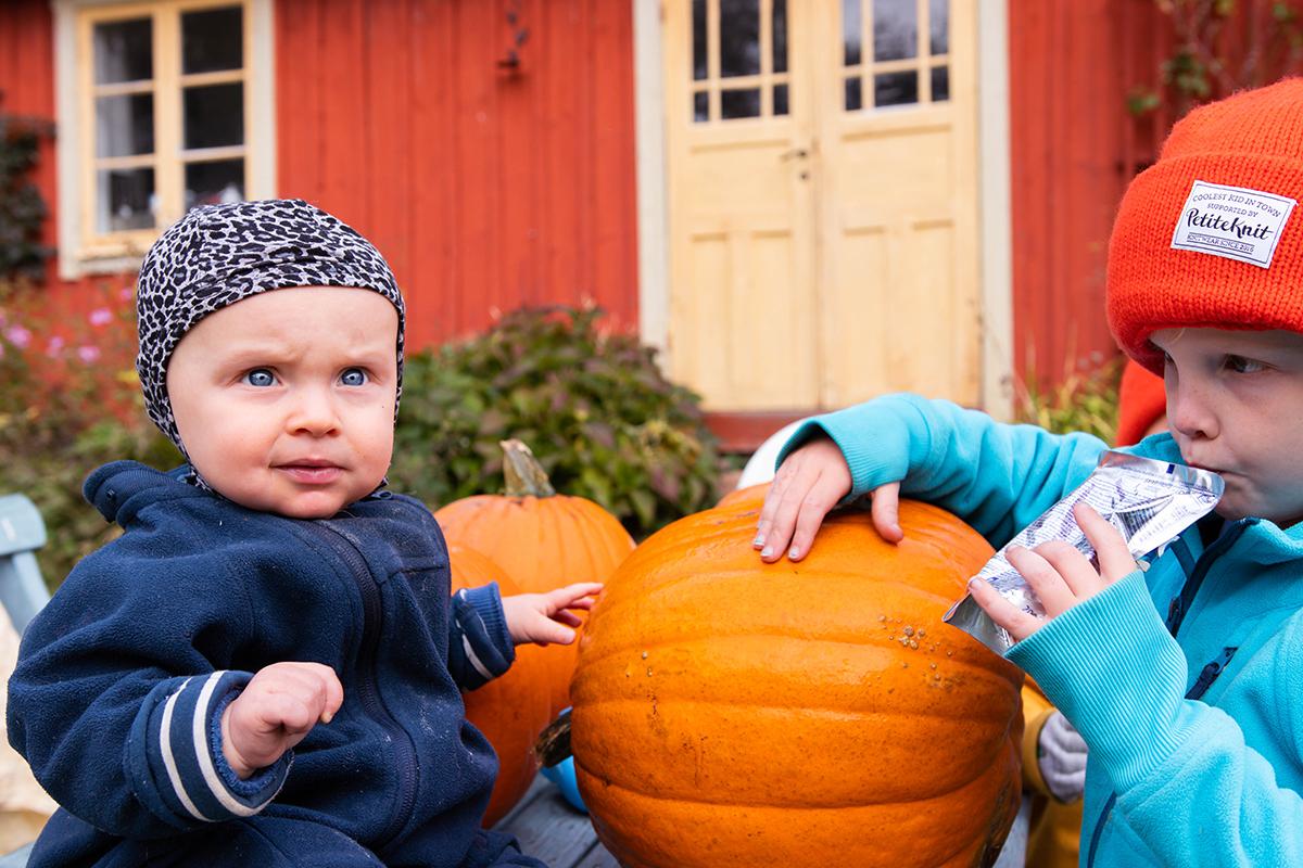 Pumpafält i Skåne, Halloween