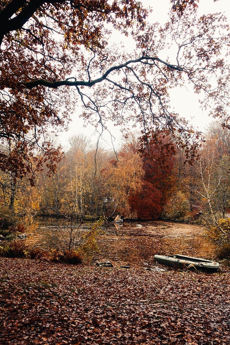 Skånesdjurpark på hösten