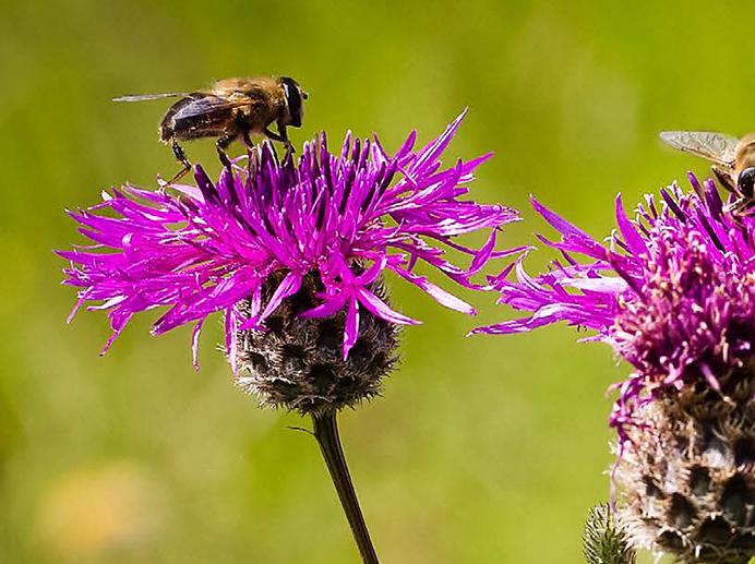 Biodiversity Initiatives Thumbnail