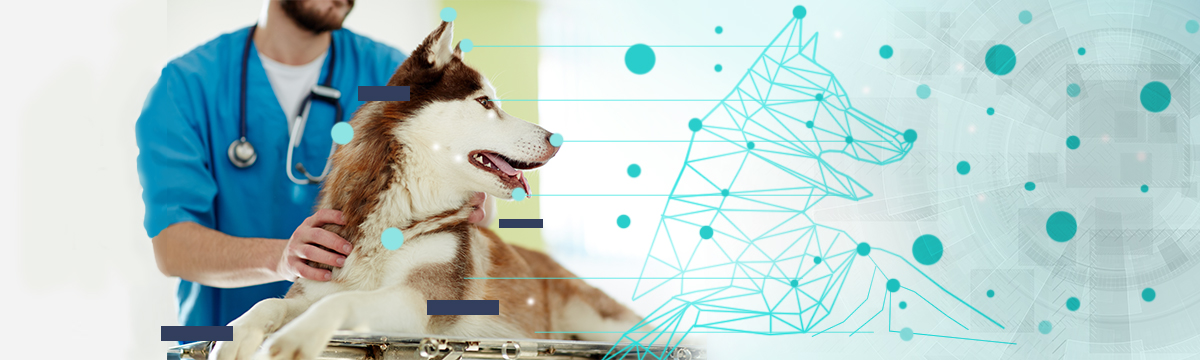 £2.7m to develop virtual dog tissues to model toxicological endpoints for New Chemical Entitles