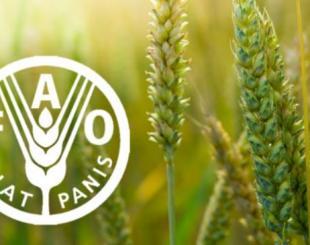 l'Organisation des Nations Unies pour l'alimentation et l'agriculture