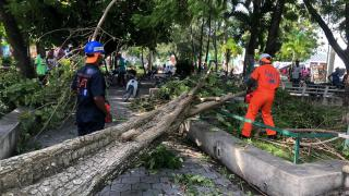 Civil Protection's agents are clearing the roads, streets and public spaces after tropical storm Laura on 23 August – Haiti, 24/08/2020 by local Civil Protection (DGPC)