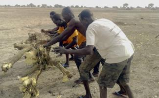 Workers removing tree trunk from airstrip