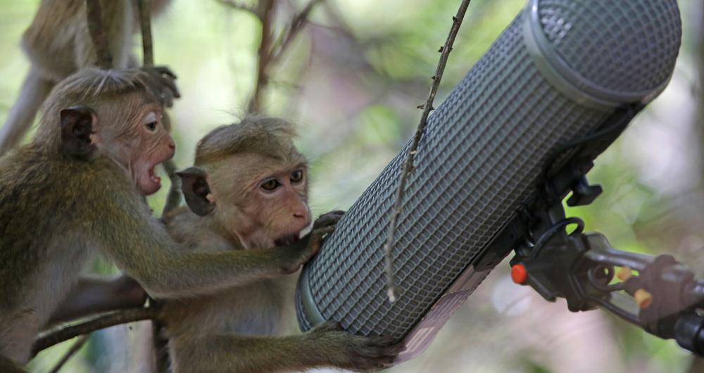Planet Primate
