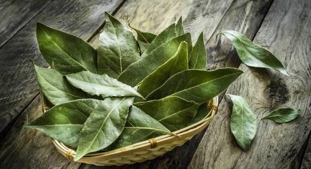 Darina Allen: The Incredible versatility of garden herbs