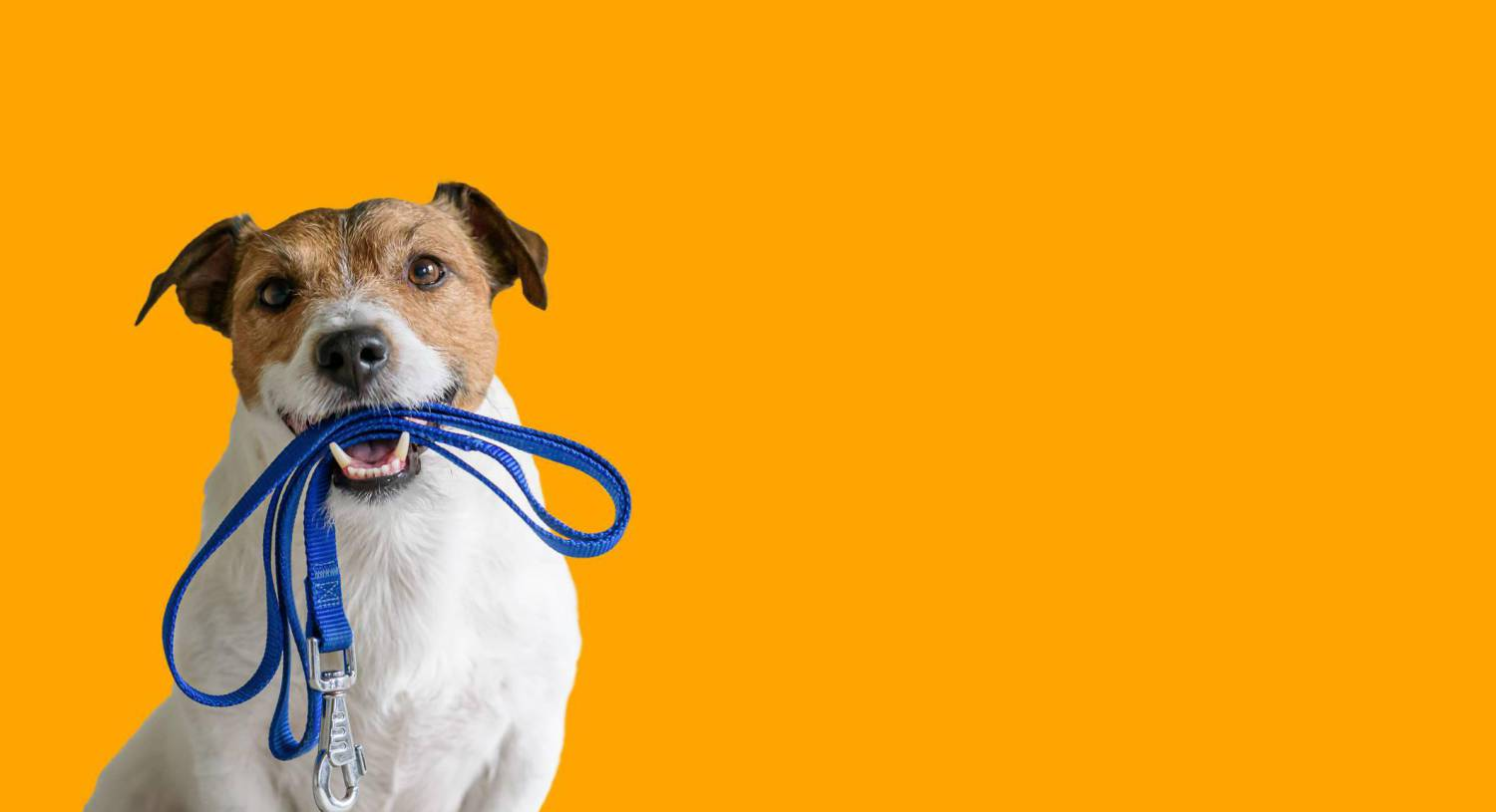Doggie daycare: Looking after your pooch during pandemic