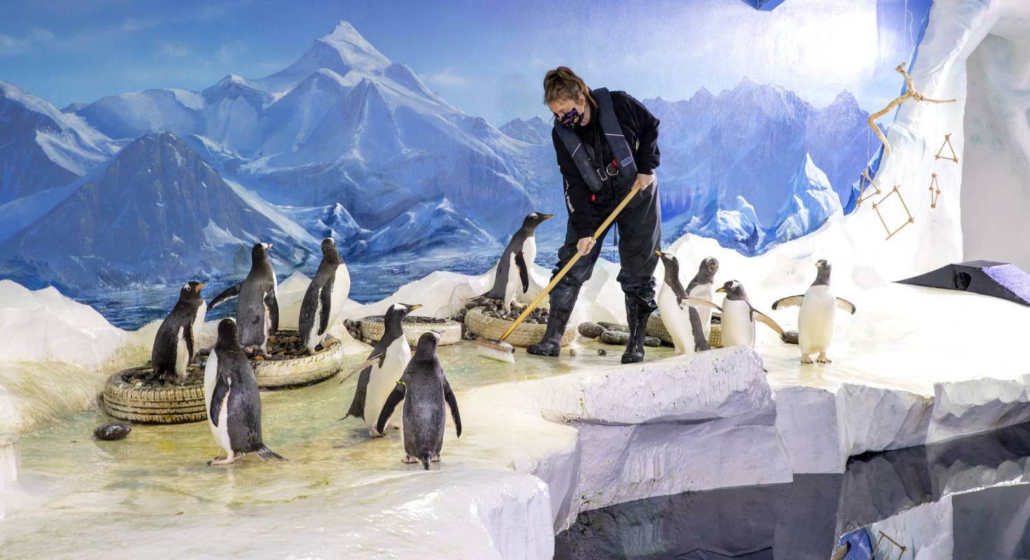 Dingle Oceanworld urgently seeks State funding to remain open