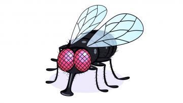 Le syndrome de la mouche