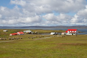 Countryside in the Falkland Islands
