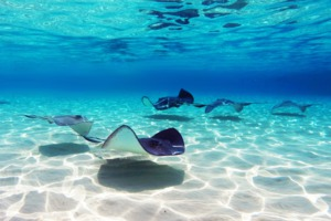 Stingray City, Cayman Islands