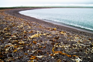 Stone beach, Saint Pierre & Miquelon