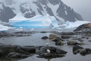 Penguins on Pléneau Island, Antarctica