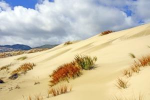 Sand dunes on Stewart Island, New Zealand