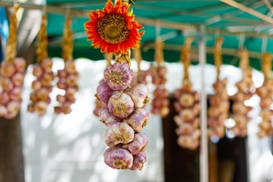 Garlic hanging up in Arles, France
