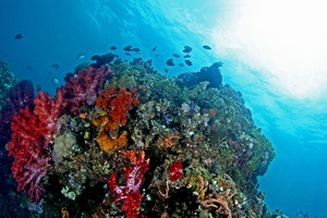 Coral reef near Ambon, Indonesia