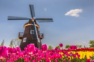Windmill and tulips in the Netherlands