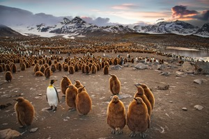 Penguins in Antarctica (Photo by Ian Parker)