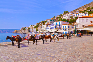 Donkeys in Hydra, Greece