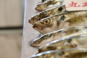 Moonfish on sale in Sakaiminato, Japan