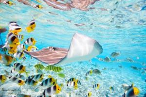 Colourful fish, Bora Bora