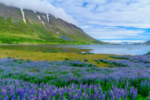 Landscape around Isafjordur, Iceland