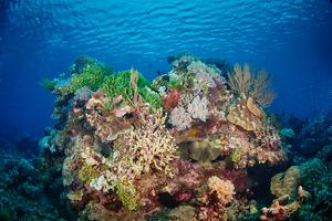 Reef off Birie Island, Indonesia