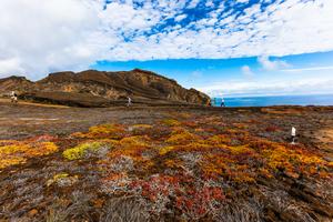 Vegetation at Punta Pitt, San Cristobal, Galapagos