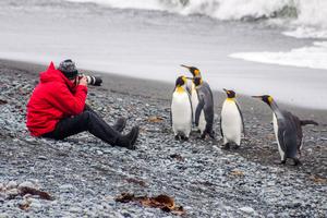Photographing king penguins at Sandy Bay, Macquarie Island, Australia